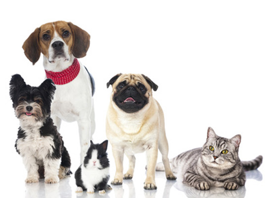 Study Best Cities For Cats Dogs And Rabbits