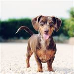 Average Cost of Owning a Dog May Surprise You