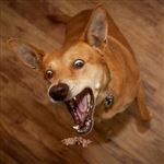 Why Dogs Fail as Home Security Systems