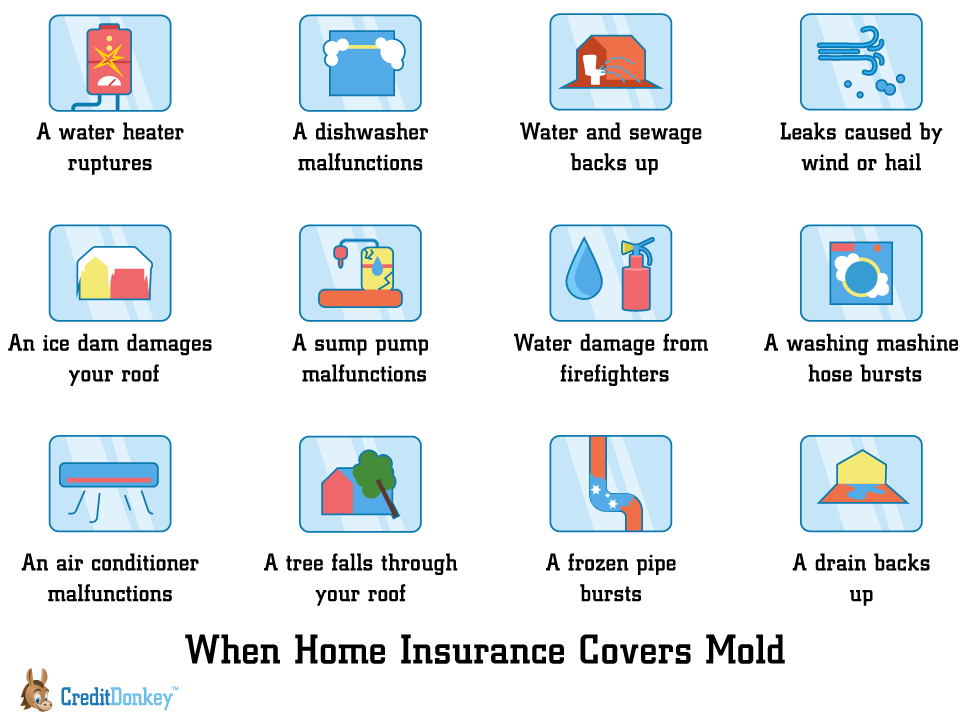 Is Mold Covered By Homeowners Insurance